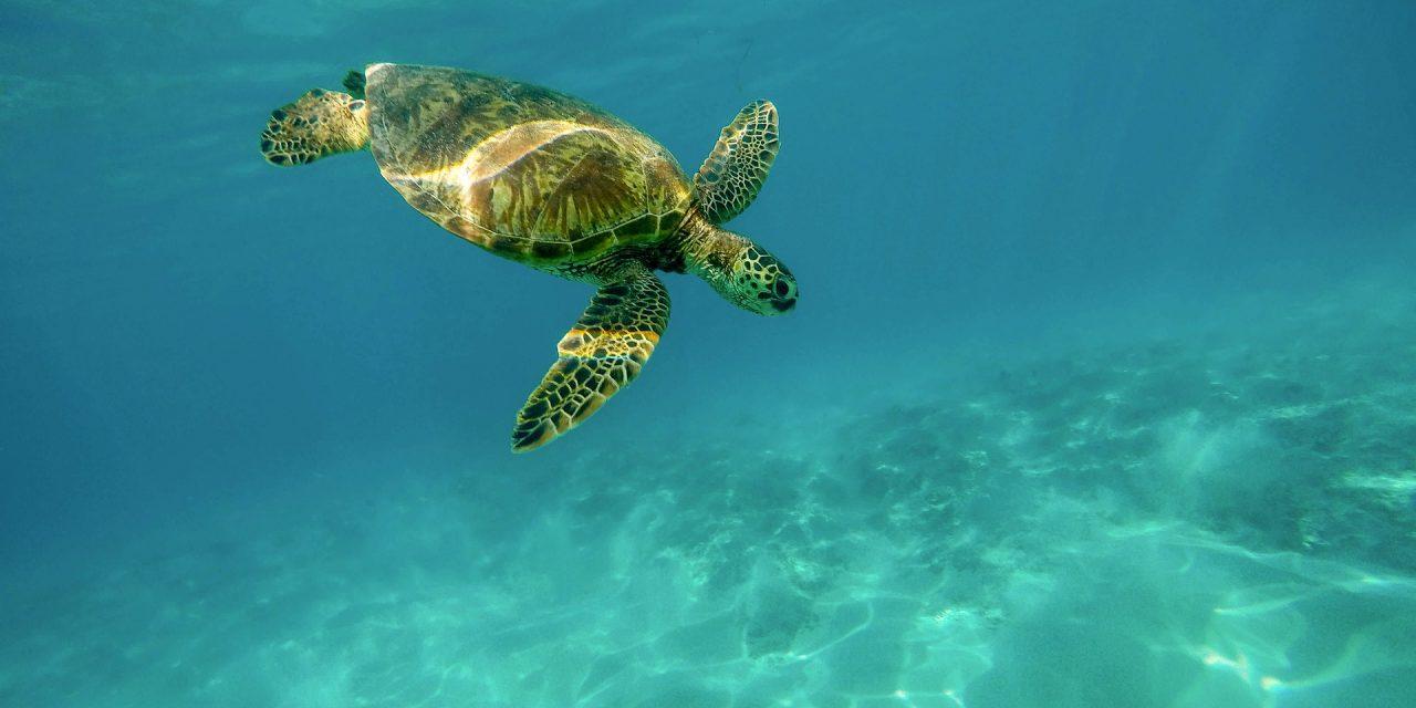 Nuevas Tortugas